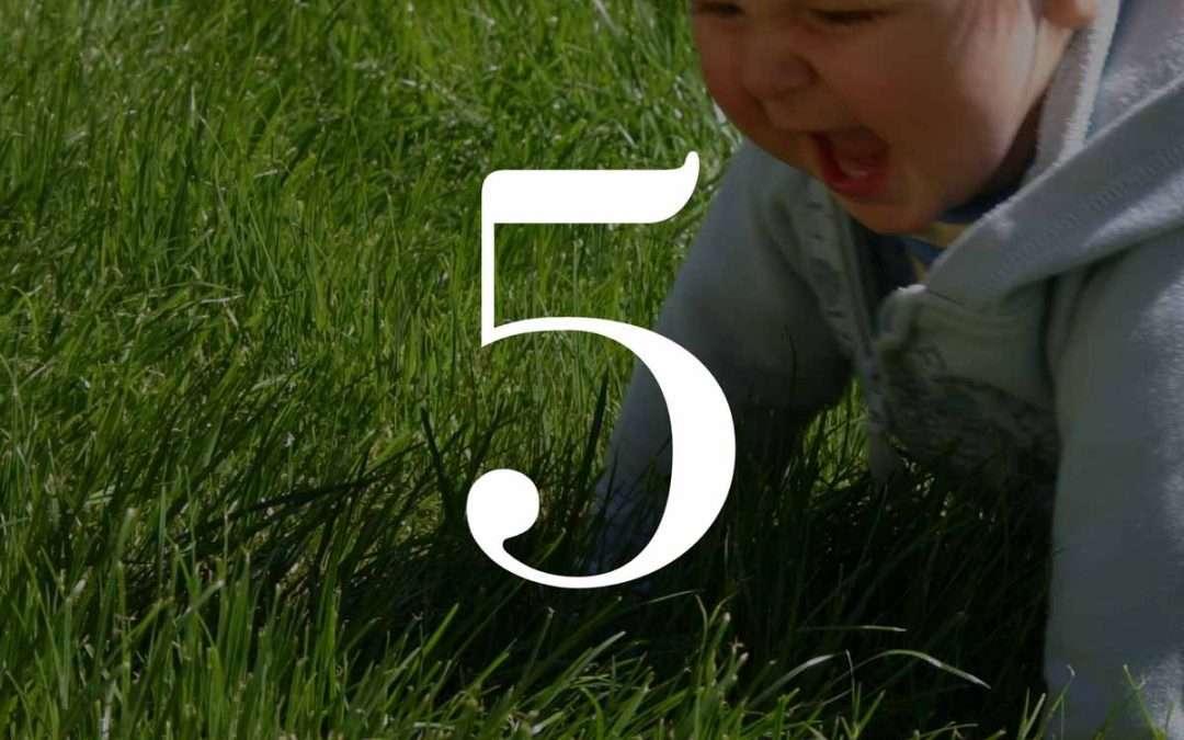 Numerologia dzieci 5 - Dorota Zwierz - NumeroloDy